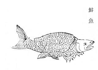 䰷鱼插图(1)