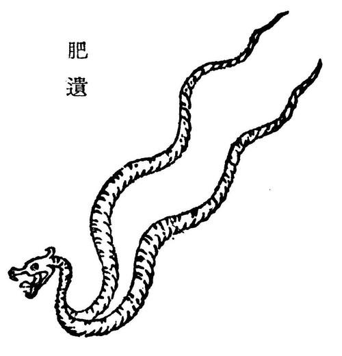 肥遗[蛇]插图1