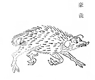 豪彘插图2