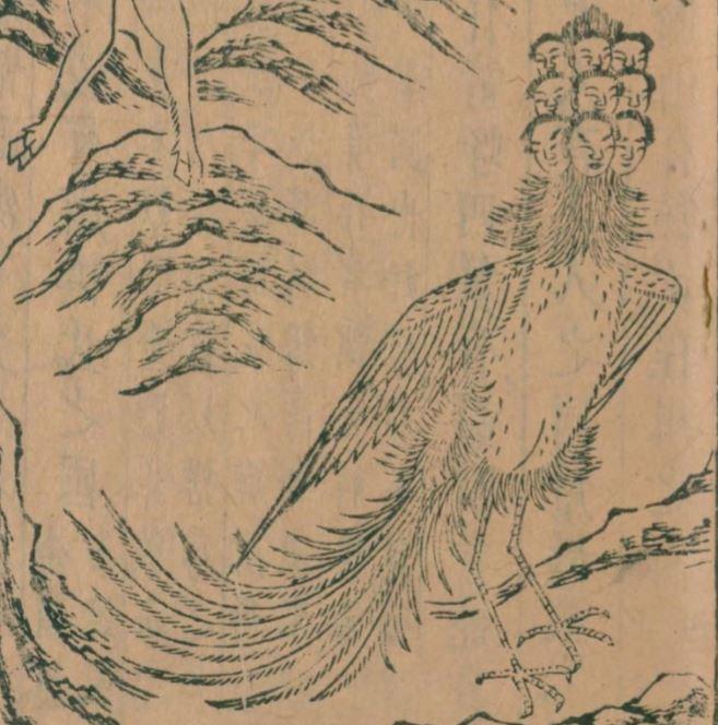 九凤插图(1)