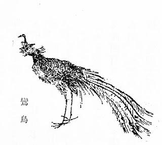 鸾插图(1)