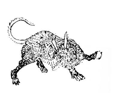 𤜣狼插图(1)
