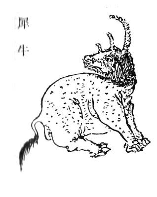 犀牛插图(1)