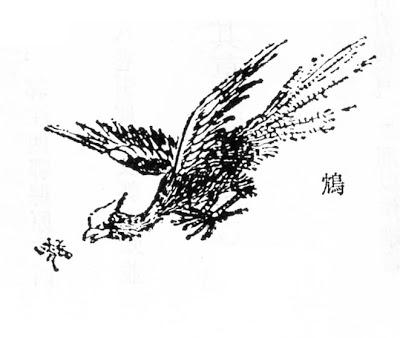 鸩插图(1)