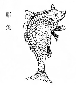 鮨鱼插图(1)