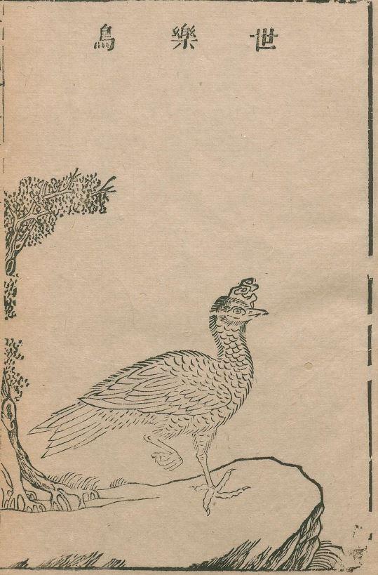 世乐鸟插图