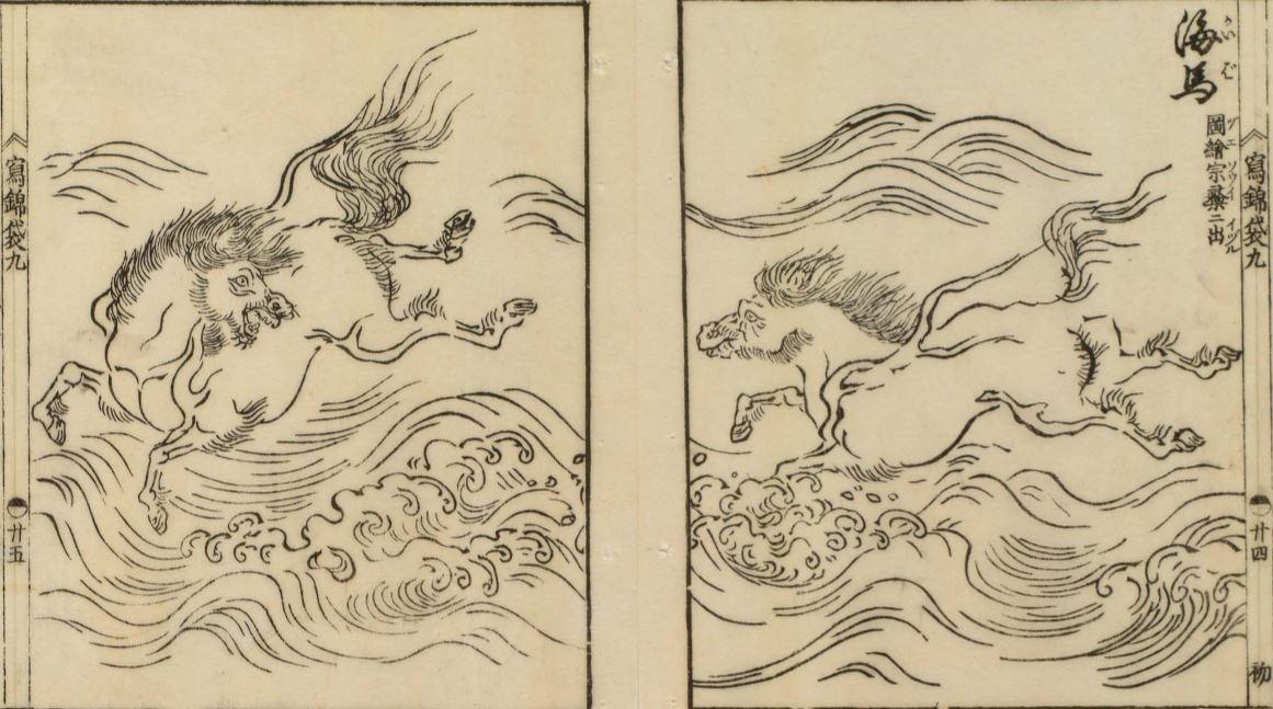 海马插图1